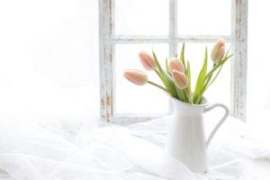 春の朝の花チューチップ